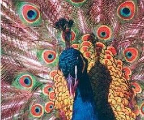 GEMBIRD MP-PICTURE  Podloga za misa sa slikom 230x180mm